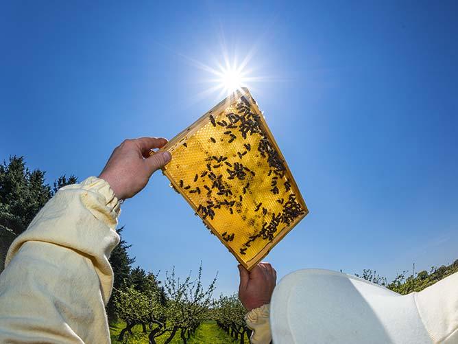 miel de letchi à La Réunion (974) | Faustin Apiculture