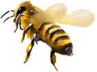 préservation des abeilles à La Réunion (974) | Faustin Apiculture