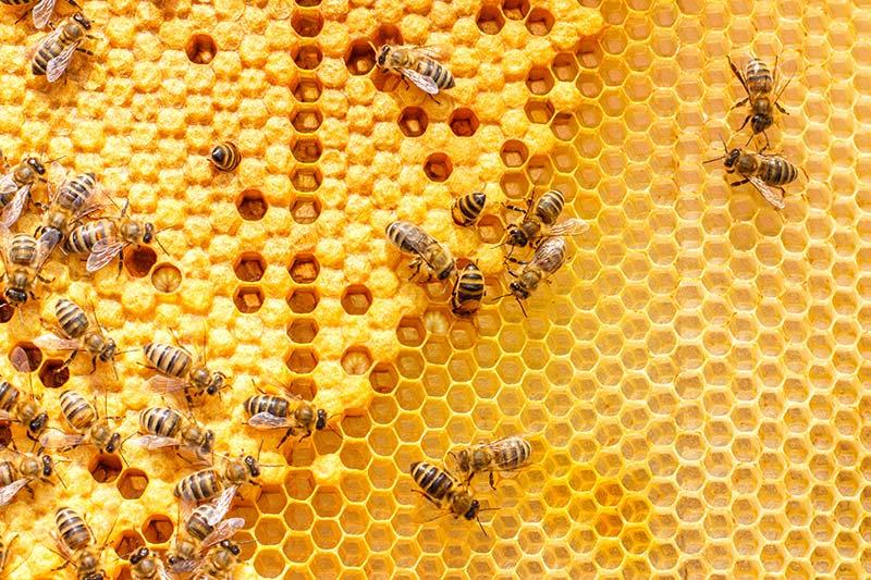 accessoires pour la ruche à La Réunion (974) | Faustin Apiculture
